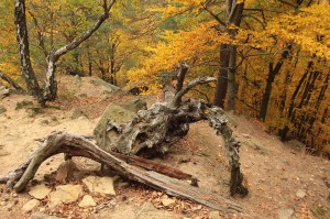 Natural monument Břestecká skála, one of chosen protected areas. Students documented damage by growing tourism at this location.